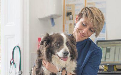 Canine Arthritis Management information resource