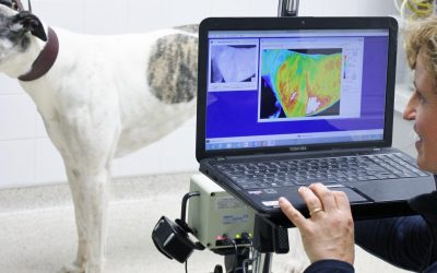 Introduction to Thermography (SyncThermology)