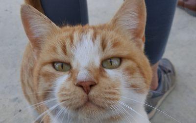 Animal Rescue Volunteering in Cyprus