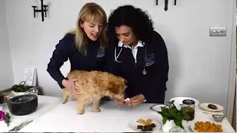 Nutrition for your Pet with Elizabeth Whiter and Dr Rohini Sathish