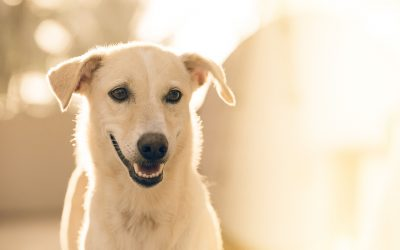 Enrichment for dogs during self-isolation